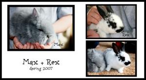 Max_rex